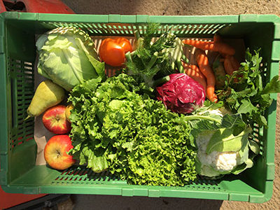 Gemüsekiste bioabo mit Salat