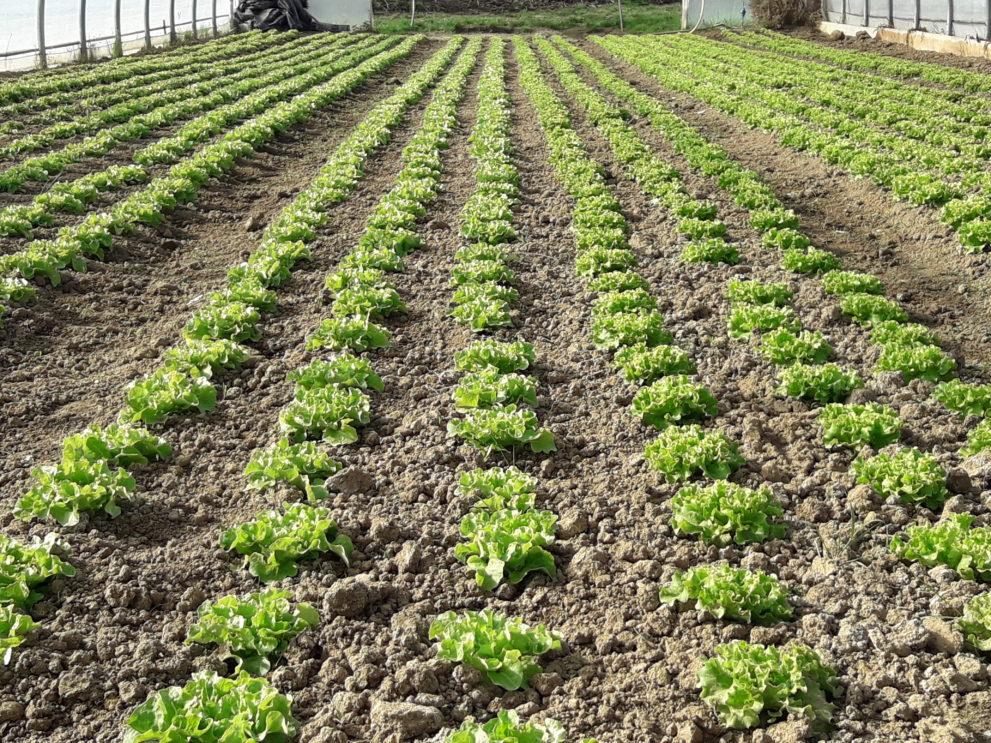 Gemüse für das Bioabo