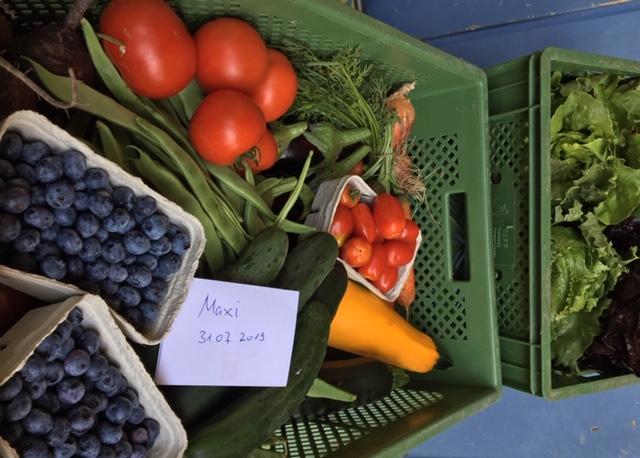 Eine Bioabo Obst- und Gemüseabo Kiste Größe Maxi